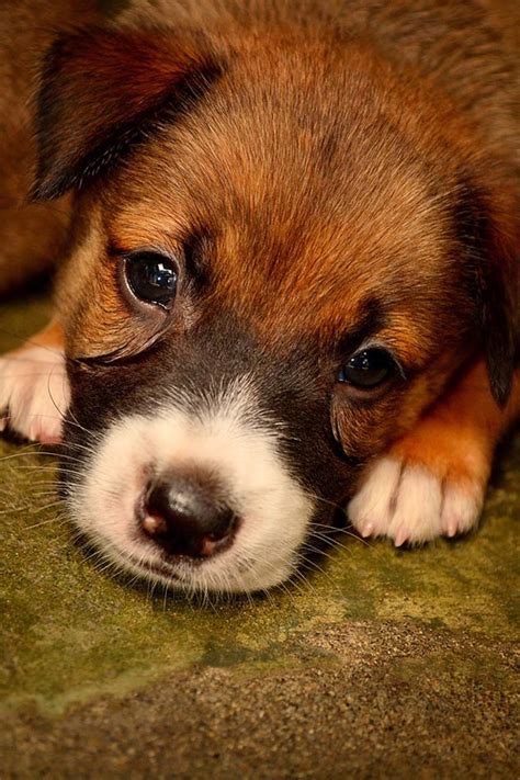 20 Cute Puppy Pictures