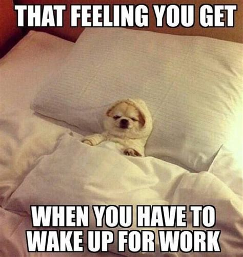 Memes About Work - how to integrate memes into your marketing strategy red marlin pr and digital agency