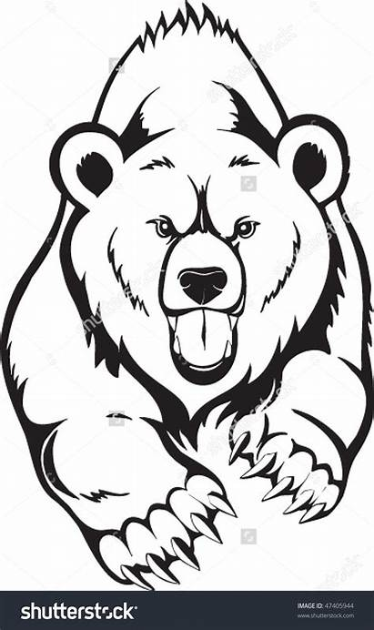 Bear Face Grizzly Vector Brown Drawing Head