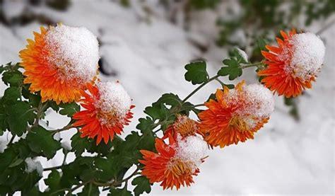 winter flowers wallpaper hd pixelstalknet