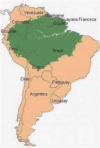 INFANTIL 4 AÑOS JIRAFAS Y LEONES: Proyecto la selva amazónica