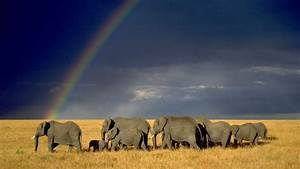 Nature, Landscape, Animals, Wildlife, Elephants, Savannah