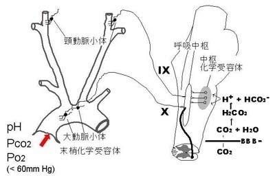 動脈血 酸素 分 圧