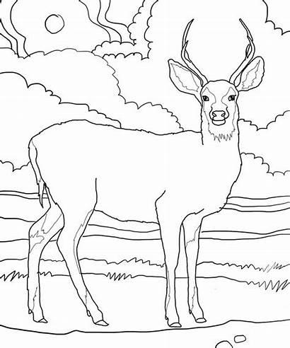 Deer Coloring Pages Printable Bestcoloringpagesforkids