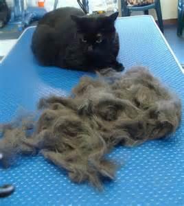 cat groomers me cat grooming