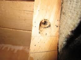 bed bug signs symptoms home pest wiki
