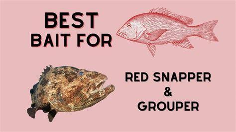 bait snapper grouper lures
