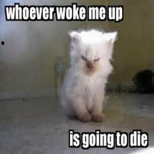 2016 Funny Cat Memes