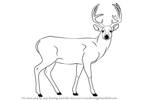 step  step   draw  buck deer drawingtutorialscom