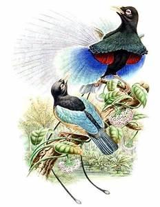 Kinderweltreise ǀ Papua-Neuguinea - Tiere & Pflanzen