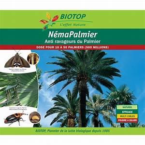 nematodes nema palmier 500 millions contre ravageurs du With photo jardin avec palmier 17 nematodes insectes achat de nematodes contre les