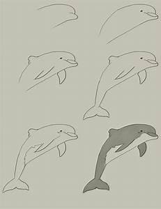 Dolphin Drawings Step By Step | www.imgkid.com - The Image ...