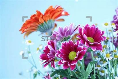 Flowers Colourful Gifs Magical Stocky Sparkling Close
