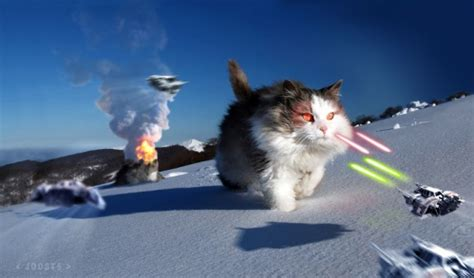 Star Wars Katze