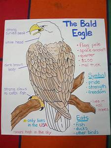 Bald Eagle Poster I Made For American Symbols Unit   I Traced The Eagle By Using The Document