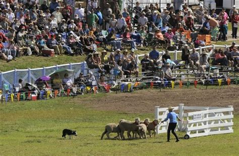 soldier hollow sheep dog championship presented  heber