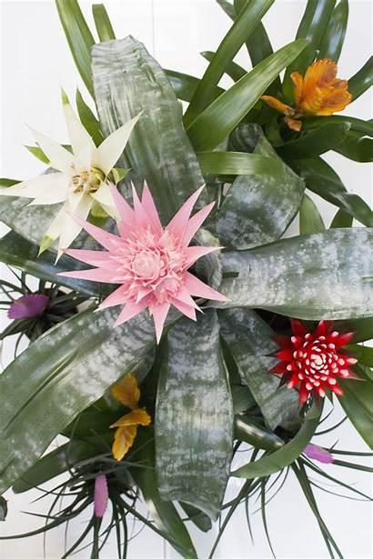 Tropical Plants Plant Indoor Tan Bell Diy