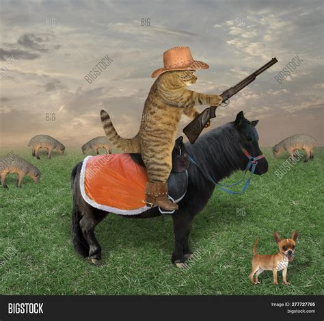 Cat Cowboy Hat Boots Image And Photo Free Trial Bigstock