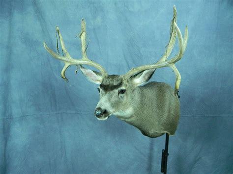 Deer, Elk & Buffalo Game Head Mounts
