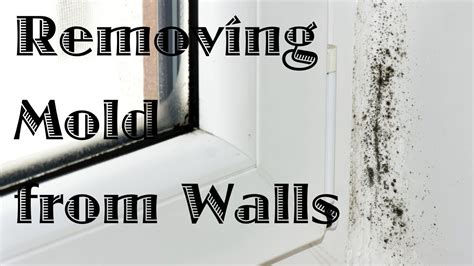 removing mold  walls youtube