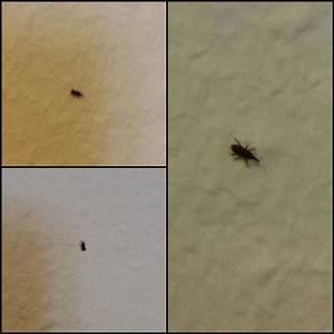 Kleine Mücken In Der Wohnung : hilfeee kleine schwarze k fer ~ Watch28wear.com Haus und Dekorationen