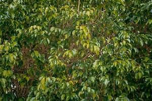 Palme Gelbe Blätter : gelbe bltter am gelbe bltter bume bltter herbst laub ~ Lizthompson.info Haus und Dekorationen