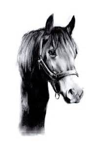 Black and White Horse Drawings