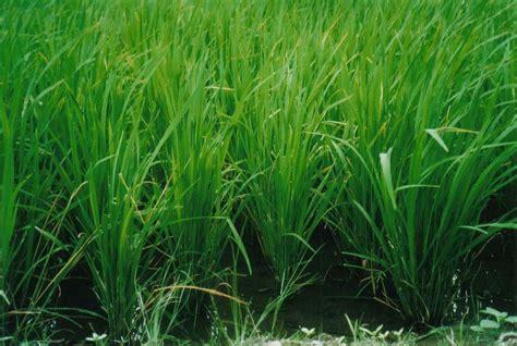 File:Reis.jpg