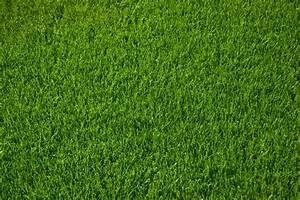 Moos Im Rasen Ursachen : englischer moos im ~ Lizthompson.info Haus und Dekorationen