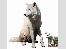White Wolf Photo Manipulation tutorials