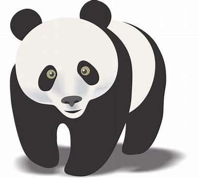 Panda Clipart Clip Bear Pandas Giant Story