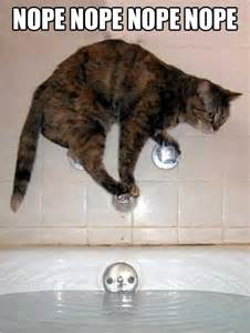 how to get a cat to take a pill this is how cats take a bath the meta picture
