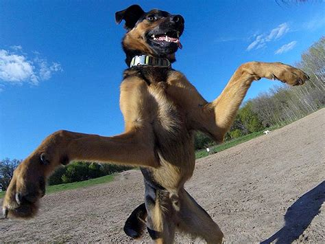 rescue dog   gopro    snaps   bffs life  dogs