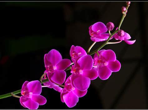 wallpaper pink motif beautiful flower pictures wallpaper 1024x768 844