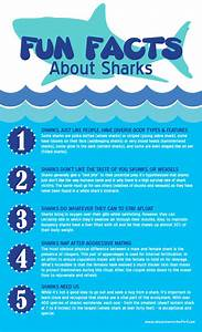 Five Surprising Facts About Sharks