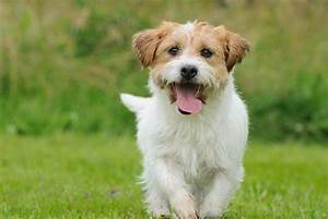 pet stores near me wwwrosyandrockycom https www With dog friendly stores near me