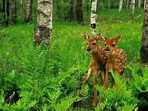 Wild, Animals, Deer, Nature, Forest, Trees, Green, Grass, Hd