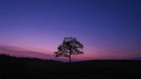 1920x1080 Dark Sky Tree Purple Sky Nature Laptop Full Hd