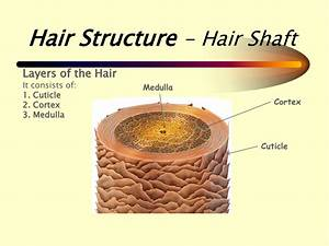 Relaxers  U0026 How To Minimise The Risk Of Hair Loss When