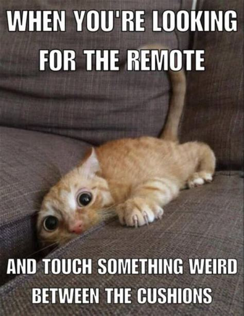 Cat Problems Meme - 25 best ideas about cats funny sayings on pinterest funny weekend quotes funny true quotes