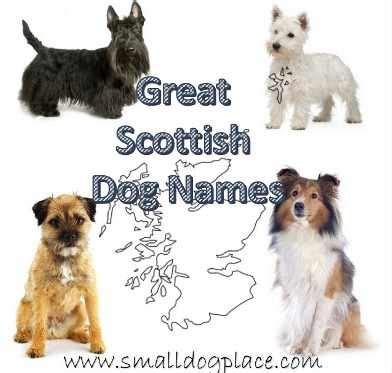 ultimate dog names resource