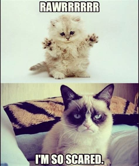 Grumpy Cat Humor For More Funny Pics And Hilarious