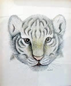 Baby Tiger Drawings