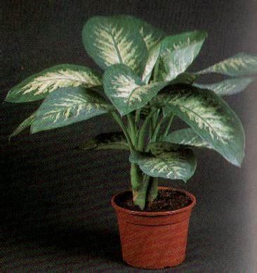 plante interieur mi ombre choisir des plantes d int 233 rieur loisirs discussions