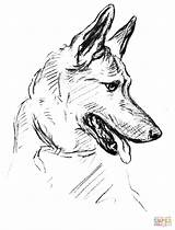 Coloring German Shepherd Dog Printable Popular sketch template