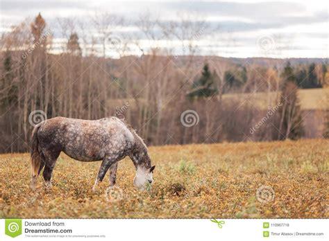 horse alone