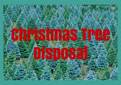 how to dispose of your christmas tree in 2015 classic