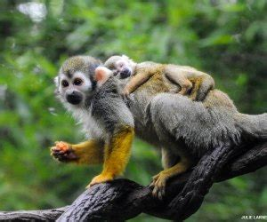 Bronx Zoo Reopens   MommyPoppins - Things to do in New ...