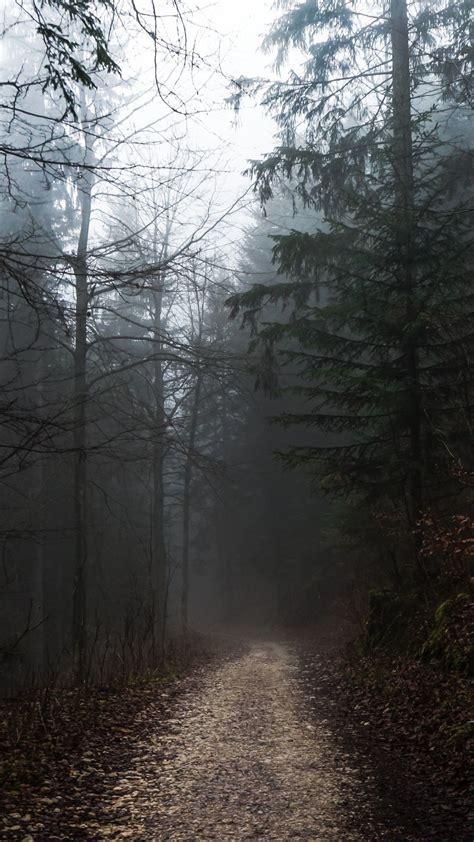 foggy forest path autumn gloomy weather adventure
