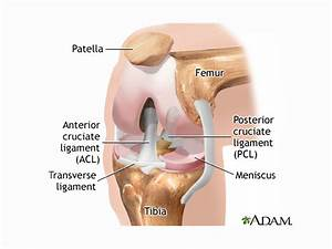 Torn Meniscus Treatments  Physical Therapy Just As Good As